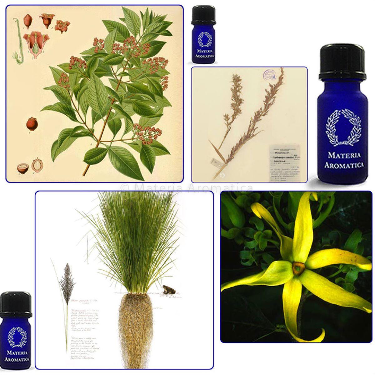 Nourish The Roots Materia Aromatica
