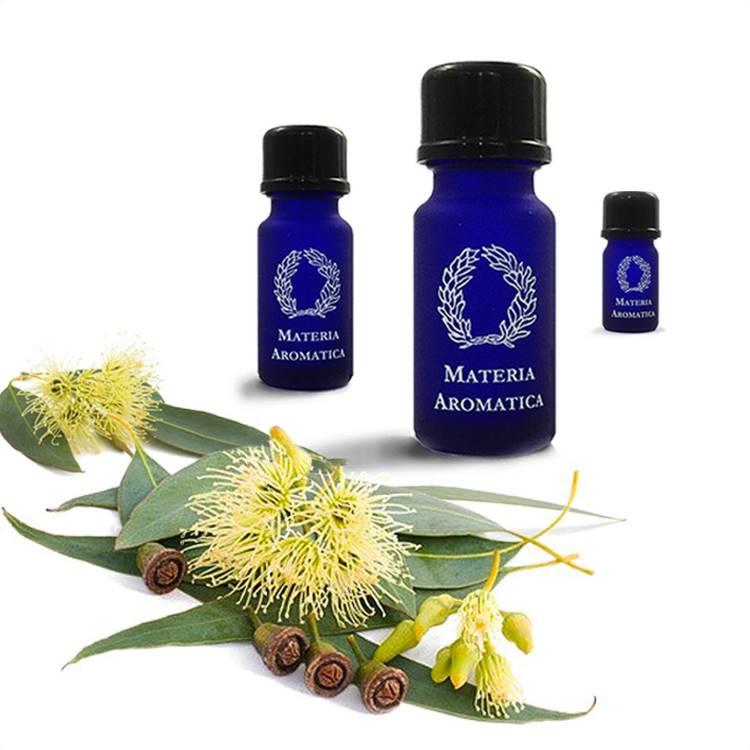 Eucalyptus, Smithii